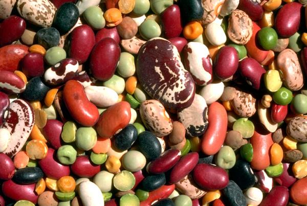 La dieta proteico-aminoacidica non intacca la massa magra