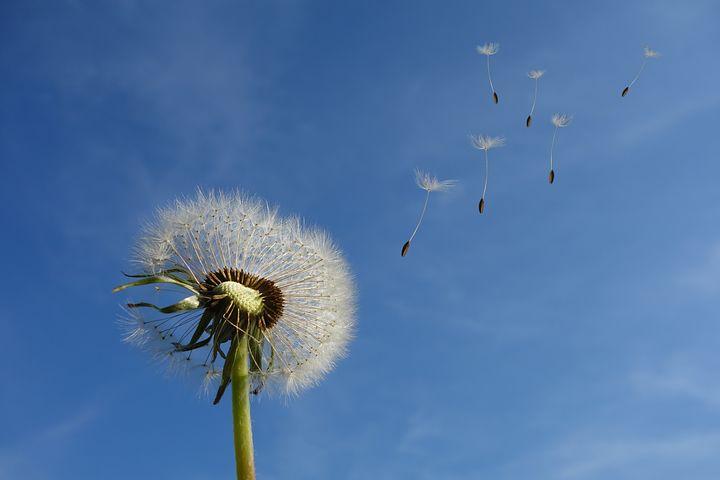 Allergie di primavera, combattile con i rimedi naturali