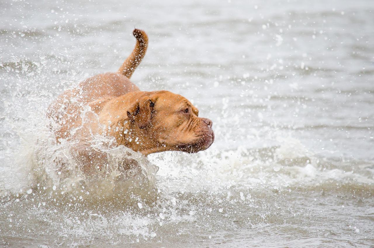 Animali domestici e vacanze estive: come comportarsi