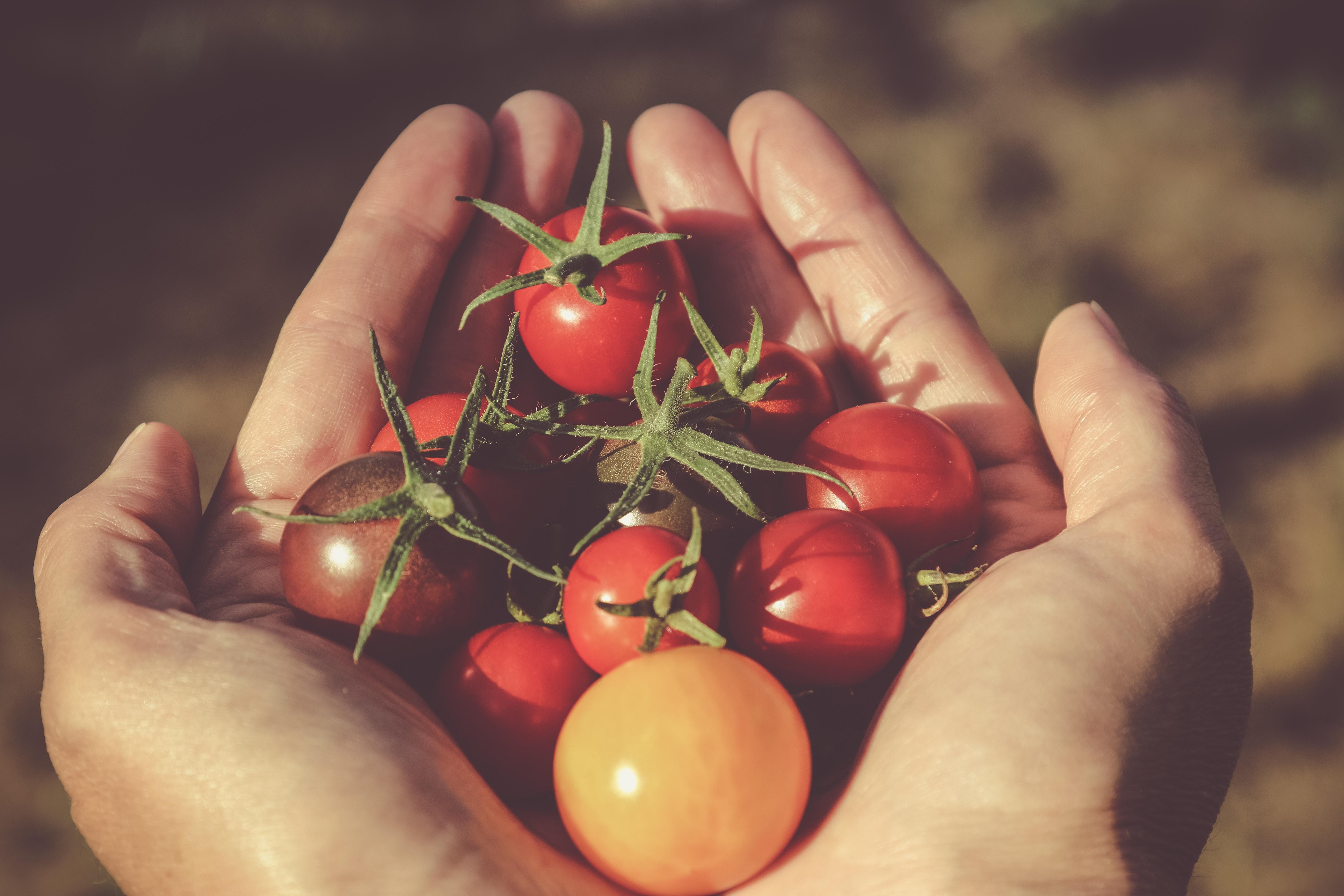 Il pomodoro, tante proprietà in un alimento estivo per eccellenza