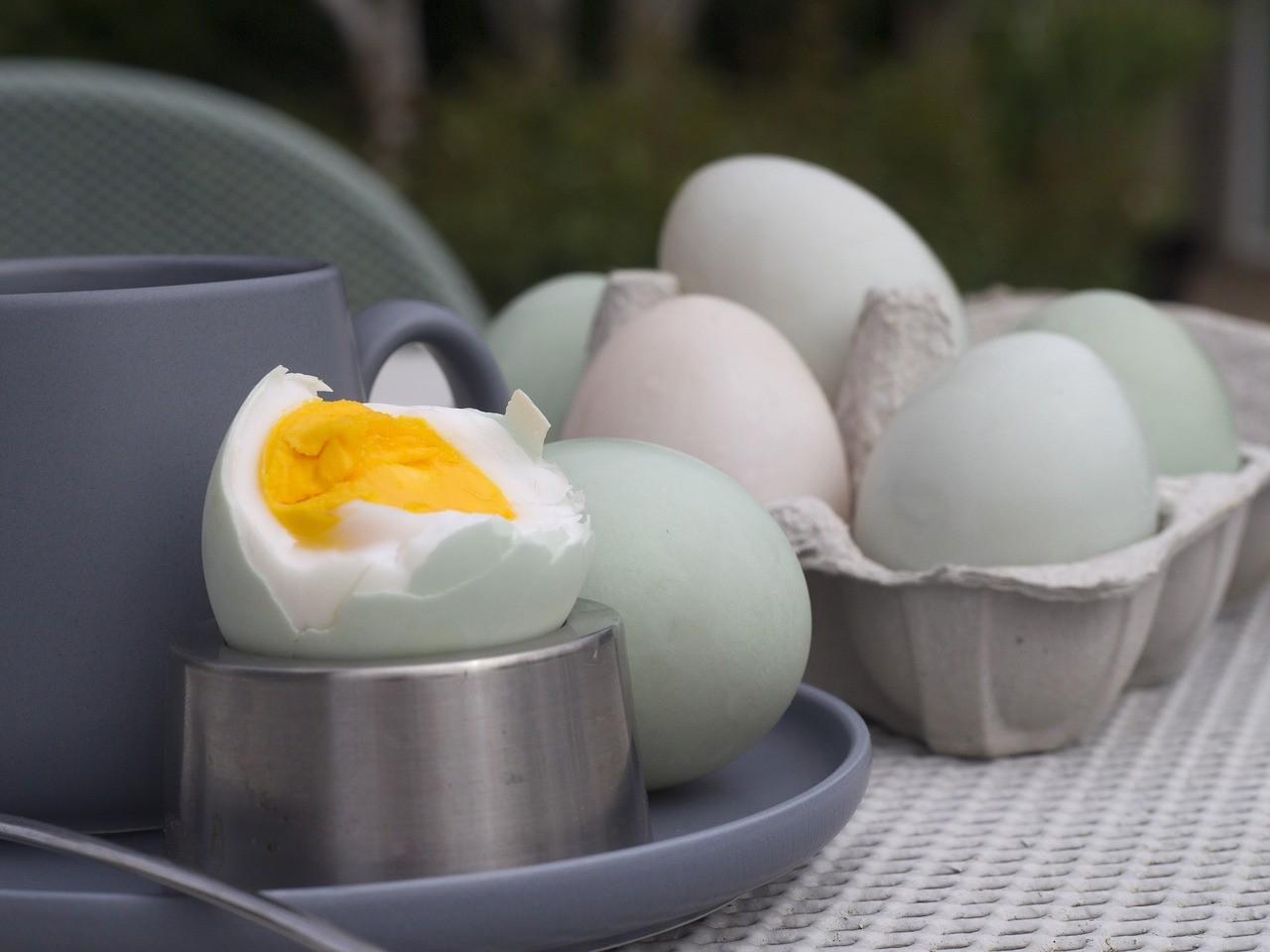 uova di anatra
