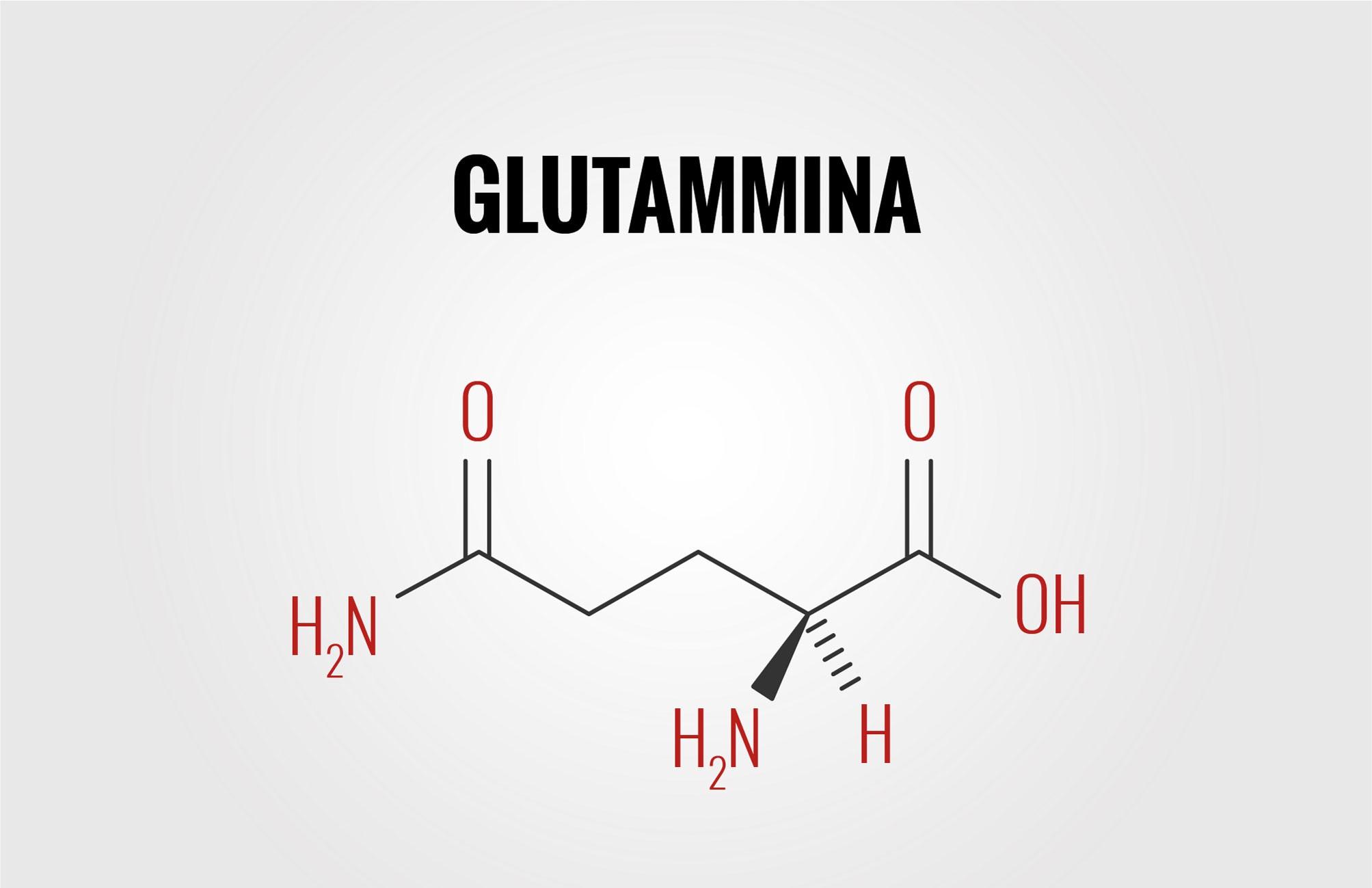 Glutammina: perché è importante