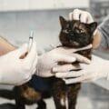 Il parere professionale…di un veterinario omeopatico