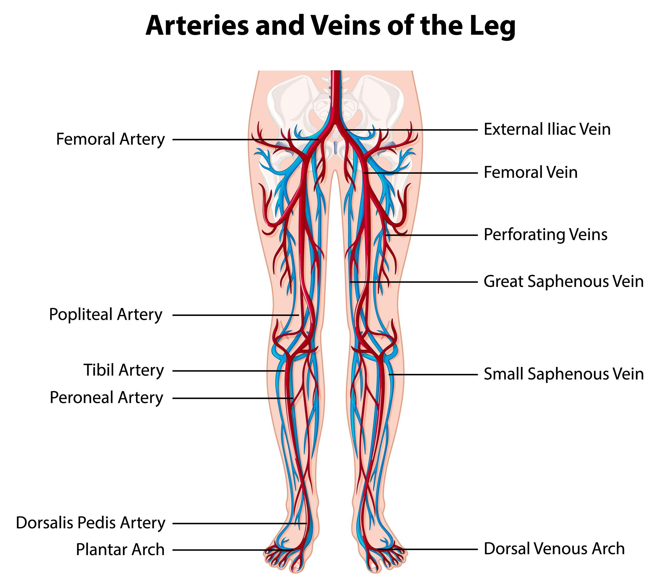 L'arteriopatia obliterante degli arti inferiori
