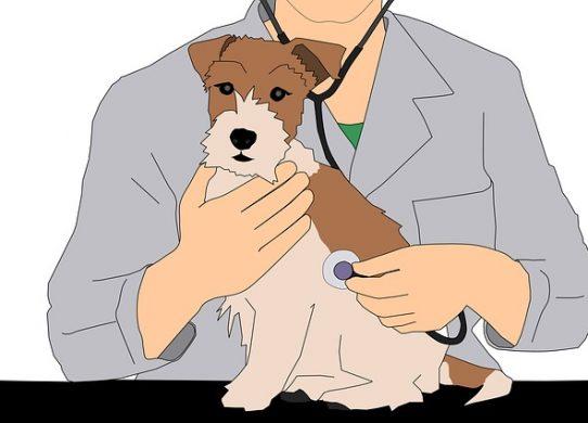 Medicina Omeopatica veterinaria il rimedio unico