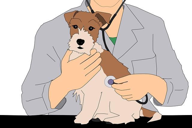 Medicina Omeopatica veterinaria: il rimedio unico