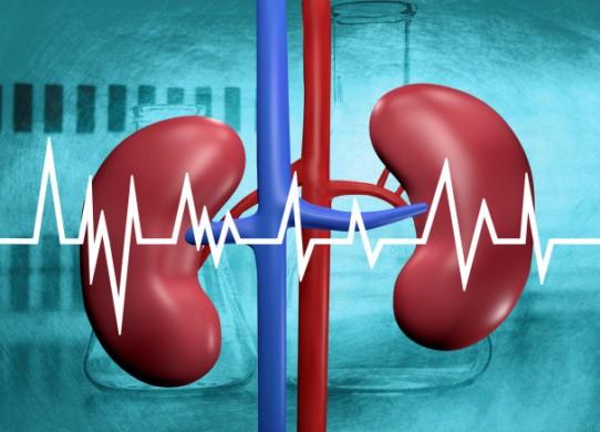 Anatomia e Fisiologia dei reni