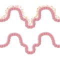 funzioni microbiota