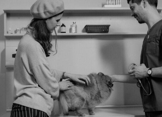 veterinario e padrone